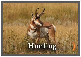 Newcastley wyoming hunting antelope