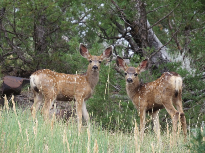 Fawns at Pines Motel in Newcastle Wy
